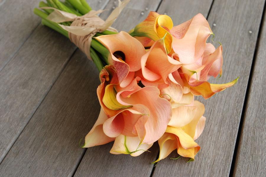 Colorado springs wedding florists springsweddings more colorado springs wedding florists request your free basic listing mightylinksfo