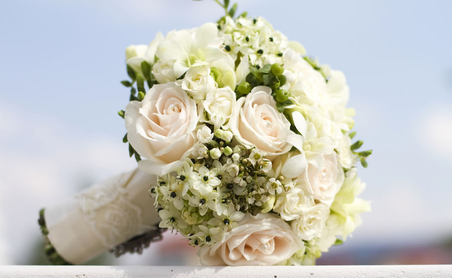Colorado springs wedding florists springsweddings more colorado springs wedding florists request your free basic listing mightylinksfo