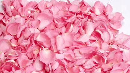 Wedding flowers colorado springs wedding florist colorado springs preserved rose petals mightylinksfo